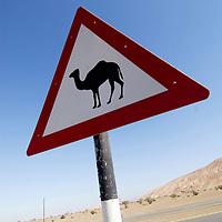 Warning: Camels ahead Dubai<br />