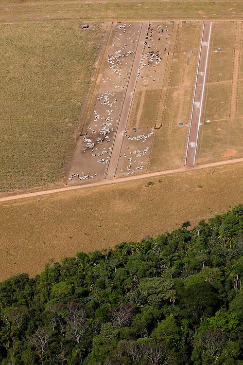 Cattle graze on ranchland  in Mato Grosso,m Brazil, August 6, 2008..Daniel Beltra/Greenpeace