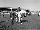 1982- Dublin Horse Show at the R.D.S.