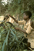 West Africa, Liberia, Kpelle tribe: boys making a fence around a field to protect it against animals.