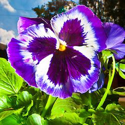 Flowers sunlight