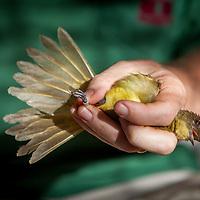 A Rocha Kenya Bird Ringing