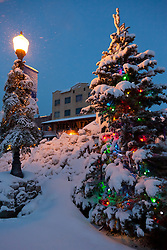 """Snowy Christmas Tree in Truckee"" - This snow covered Christmas tree was photographed in Historic Downtown Truckee, CA."