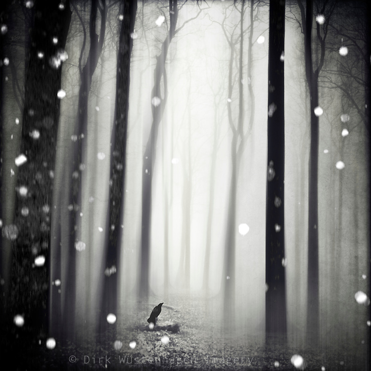 Surreal forest  winter scenery with snow flakes<br /> Prints &amp; more: http://www.redbubble.com/people/dyrkwyst/works/23202107-wintersong?asc=u&amp;ref=recent-owner
