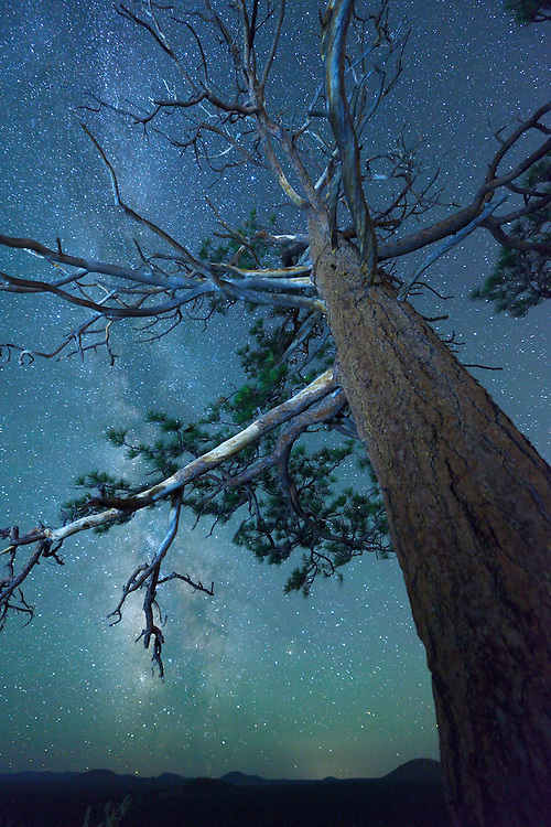 Night Sky with Pine Tree on Horse Butte near city of Bend, Deschutes County, Central Oregon, Oregon, USA