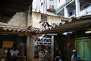 Photos taken in Havana, Cuba by Lisa Dierolf Shires.