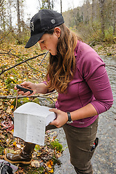 Rachel Wheat, a graduate student at the University of California Santa Cruz, uses a GPS to record the location a salmon carcass from which she has taken a bear saliva DNA sample from on the banks of the man-made spawning channel of Herman Creek, near Haines, Alaska.<br /> <br /> Wheat is collecting DNA samples of bears from bear saliva left on salmon carcasses as part of research for her doctoral dissertation. She hopes to determine if partially-consumed salmon carcasses can serve as a viable source for bear DNA to genotype individuals. She also looking to determine a minimum population estimate for the number of bears using the Chilkoot Valley and the ratio of males to females, particularly in light of increase human presence. <br /> <br /> The bear DNA collection is part of her dissertation which looks at how the availability of salmon affects eagle movement, bear activity, and subsistence fishermen. EDITORS NOTE: Images of Wheat capturing bald eagles for the bald eagle portion of her study are available here: http://denglerimages.photoshelter.com/gallery/Bald-eagle-research-Chilkat-River-eagle-migration-study/G0000GTyPvah7eiQ/<br /> <br /> During late fall, bald eagles congregate along the Chilkat River to feed on salmon. This gathering of bald eagles in the Alaska Chilkat Bald Eagle Preserve is believed to be one of the largest gatherings of bald eagles in the world.