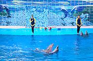 Dolphin show at the Acuario Nacional de Cuba, Havana.