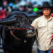 Monday, Oct. 29, 2012, at the Chonburi, Thailand, Water Buffalo races.  The event, which is celebrate at the end of Buddhist lent, has been an ongoing fair for more than 150 years.