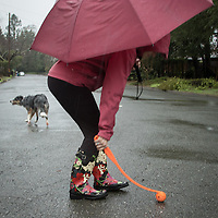 Mitzi Mishler runs her dog, Molly, on a very rainy morning in Calistoga