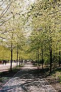Pathway in the Tiergarten, the largest park in Berlin.