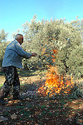 Israel, Upper Galilee, The Bedouin village of Wadi Salame, burning the pruned branches