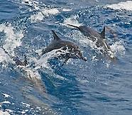 Guam Marine Life Images