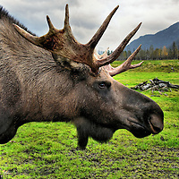 Anchorage Day Trips
