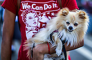 A protester holds her dog marching toward downtown Los Angeles as thousands of people participating in the annual May Day marches downtown Los Angeles May 1, 2015. Labor organizations and immigration groups used the annual celebration to push for higher wages, immigration reform and justice for minorities.