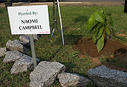 """A sign marks the spot where super model Naomi Campbell planted a cocoa tree during a ceremony in association with the 3rd annual ThisDay festival July 11, 2008 in Abuja, Nigeria. The ThisDay festival, themed """"Africa Rising"""", is an effort to raise awareness of African issues and promote positive images of Africa using music, fashion and culture.."""