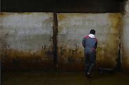 27/10/15 - TENCE - HAUTE LOIRE - FRANCE - Quentin CHAVE jeune passionne d elevage laitier sur l exploitation familliale de son oncle - Photo Jerome CHABANNE