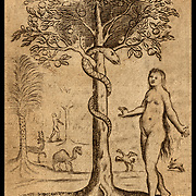 """The Serpent and Eve  in the Garden of Eden from Francis Quarles """"Emblemes"""" 1635. Snake in the Tree of Knowledge. Vintage woodcut illustration."""
