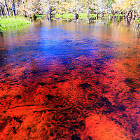 Naturally occurring tannins impart a reddish cast to the waters of Fisheating Creek in Florida's Fisheating Creek Wildlife Management Area (WMA). WATERMARKS WILL NOT APPEAR ON PRINTS OR LICENSED IMAGES.