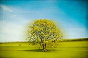 Abstraction of an oak tree in rural surroundings<br /> <br /> Prints &amp; more:<br /> http://society6.com/product/eternal-spin_Print
