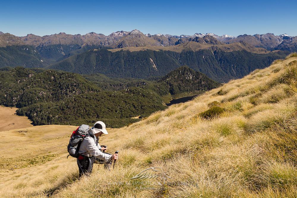 Hiker amongst golden tussock, along the hike to Mount Burns, Fiordland.