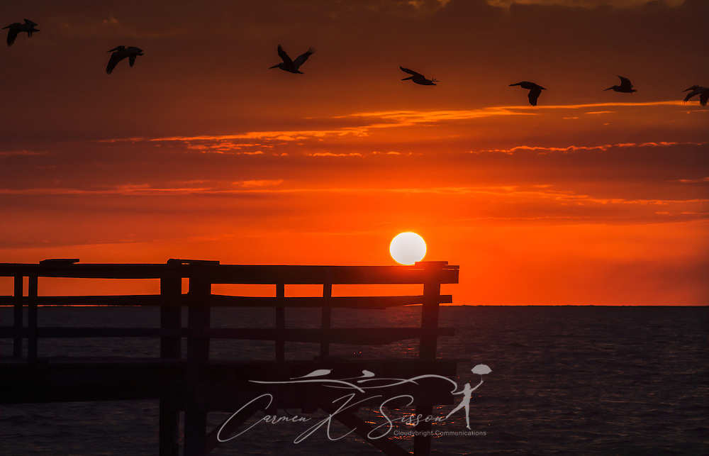 Seven pelicans fly over cedar point fishing pier at sunset for Dauphin island fishing pier