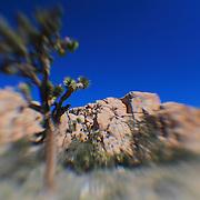 Joshua Tree Crumbling Rocks - Lensbaby