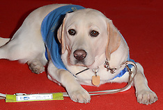 10 DEC 2014 The Guide Dog Of The Year Awards 2014