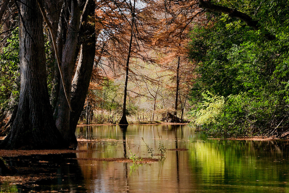 Stock photo of the fall colors of the cypress trees along the river in the Texas Hill Country