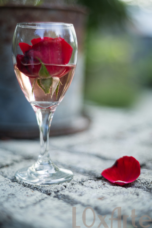 A glass of Rosé wine with a red rose floating in it and a red petal to the side on a stone ledge. The image is available for commercial licensing through Arcangel Images. ID# AA1644980 . Contact LOxArte for Fine Art Prints.