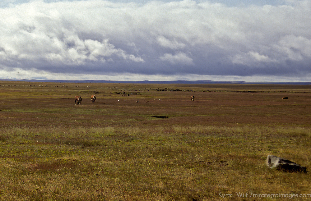 South America, Argentina, Patagonia. Windswept Patagonian plains.