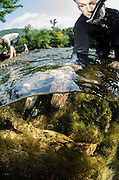 Researcher Stephen Spear &amp; Eastern Hellbender (Cryptobranchus alleganiensis <br /> Hiwassee River, Cherokee National Forest<br /> Tennessee<br /> USA