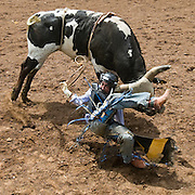 J D Sessions of the Wasatch rodeo club competes in Bull Riding at the Utah State High School Rodeo Championships at the Wasatch County Fairgrounds in Heber City, Utah, Thursday, June 11, 2009. August Miller, Deseret News .