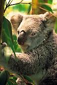 Australia World Travel Photos
