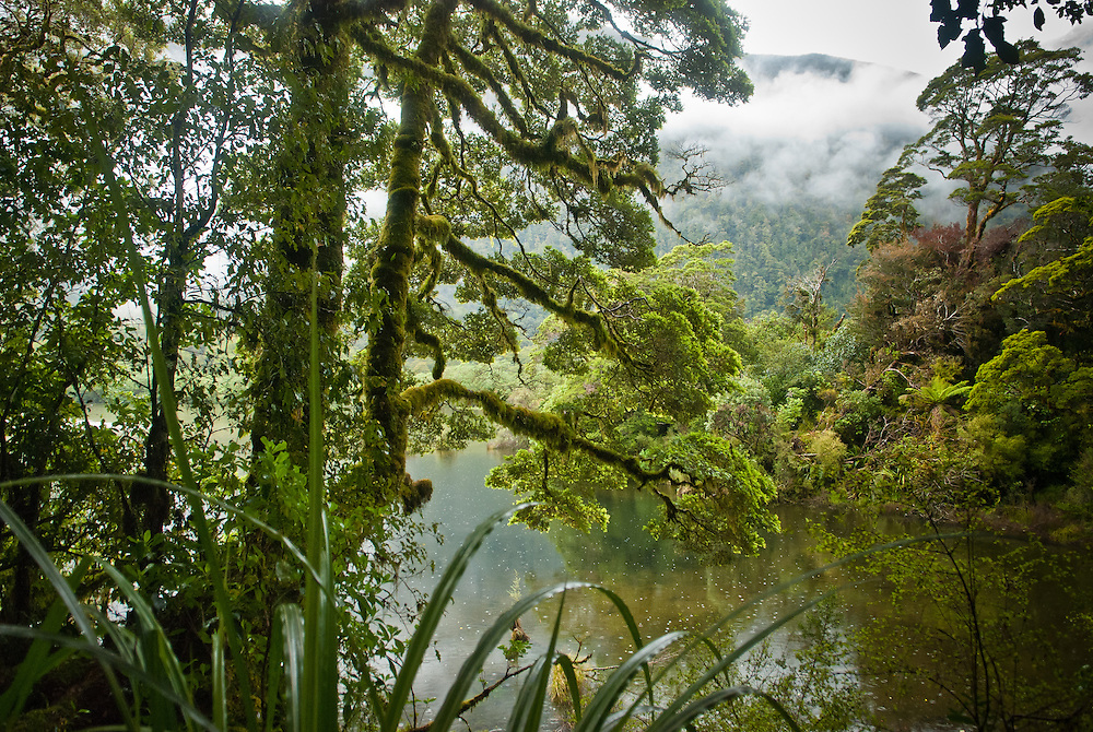 Large moss-covered beech trees overhang a quiet bay overlooking Lake Ada, Arthur Valley, on the Milford Track, New Zealand