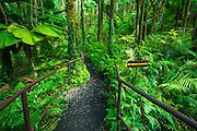 Jungle trail at Hawaii Tropical Botanical Garden, Hamakua Coast, The Big Island, Hawaii USA