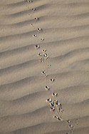 Death Valley is the hotest, driest and lowest desert in the United States.
