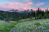 Sunset at the Tatoosh Range from Paradise in Mount Rainier National Park, Washington State, USA