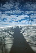 Beech shadow on snowy field