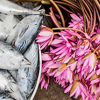 fresh mackerel and lotus flowers, duong dong morning market