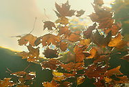 Underwater Scene (Fall)<br />