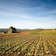 Burgundy (Bourgogne)