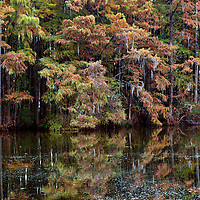 NC00546-00...NORTH CAROLINA - Reflections in Greenfield Lake, Wilmington.