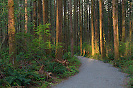 The new hiking trail at Campbell Valley Regional Park in Langley, British Columbia, Canada