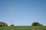 Electricity Pylon, suspension tower design set against a blue sky above a wheat field in early growth stage near Leckhampton Hill in Gloucestershire, England. The moon is visible above the copse.