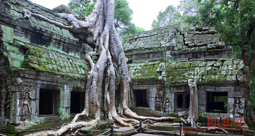 Ta Prohm temple and tree roots (Tetrameles nudiflora).<br />