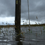 10/30/12 - Smyrna, DE - Hurricane Sandy - A utility pole is partly under water on Woodland beach Rd Tuesday, Oct. 30, 2012, in Smyrna DE. ..SAQUAN STIMPSON/Special to The News Journal