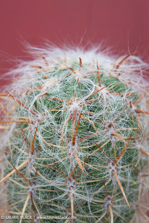 Succulent botanical photo