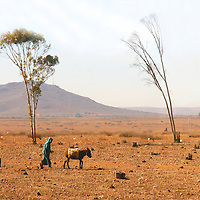 North Africa, Africa, Morocco. A lone person and donkey make their way across the Moroccan landscape.