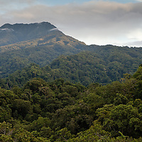 Montane forest on Kolombangara